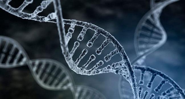 xromosoma