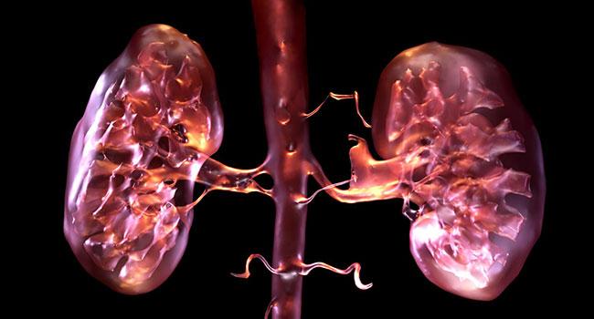 Снимок органа